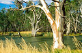 CSIRO ScienceImage 4016 Murrumbidgee River scene near Darlington Point NSW 1991.jpg