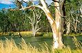 CSIRO ScienceImage 4016 Murrumbidgee River scene near Darlington Point NSW 1991.jpg