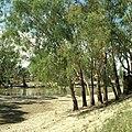 CSIRO ScienceImage 4404 Chowilla creek scene Chowilla SA.jpg