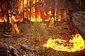 CSIRO ScienceImage 504 Project Vesta Experimental Fire.jpg
