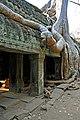 Cambodia-2595 - Ta Prohm (3613620488).jpg