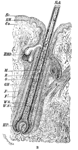 Cambridge Natural History Mammalia Fig 001b.png