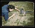 Camouflage class at N(ew) Y(ork) University, where men and women are preparing for jobs in the Army or in industry, New York, N.Y. This model has been camouflaged and photographed. The girl LCCN2017878858.jpg