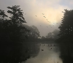 Canada Geese and morning fog.jpg