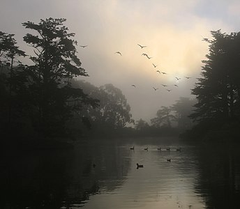 Canada Geese and morning fog