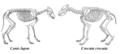 Canis lupus & Crocuta crocuta.png