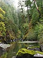 Canyon in the Copper Salmon Wilderness, Rogue River Siskiyou National Forest (23548677769).jpg