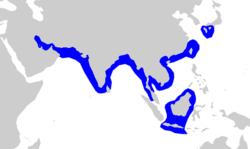 スミツキザメの分布域