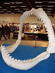 Carcharocles megalodon.