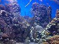 Caribbean coral reef.jpg