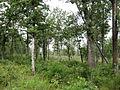 Catoosa Savanna.jpg