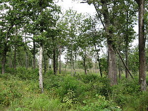 Catoosa Wildlife Management Area - Oak savanna maintained with prescribed fire
