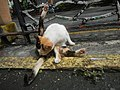 Cats in t1302Cats in the Philippines 09.jpg