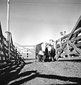 Cattle Stockyards, Texas and Pacific Railway Company (16116249430).jpg