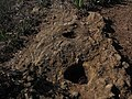 Cazoletas Cumbrita del Palmar - panoramio.jpg