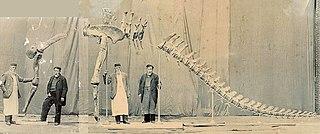<i>Cetiosauriscus</i> genus of reptiles (fossil)