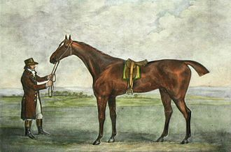Champion (horse) - Champion. Coloured engraving after a painting by John Nott Sartorius.