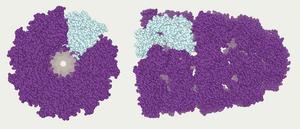 Abalone (molecular mechanics) - Protein model on Abalone