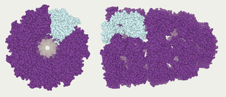 Abalone (molecular mechanics) - Protein model on Abalone