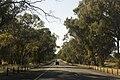 Chiltern VIC 3683, Australia - panoramio (12).jpg