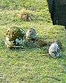 Cippi funerari della necropoli del crocifisso del tufo.jpg