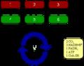 Citratzyklus überblick.png