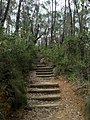 Cliff Top Track - panoramio (12).jpg