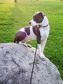 Atlas Dog Park On Moyer Loop