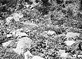 Collectie Nationaal Museum van Wereldculturen TM-10021360 Een stuk grond met veel rotsen Saba -Nederlandse Antillen fotograaf niet bekend.jpg