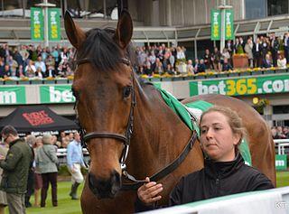 Coneygree British-bred Thoroughbred racehorse