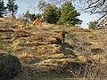Coppia di cavalli al pascolo - panoramio.jpg