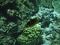 Coral reef 105.jpg