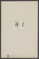 Cosmoceras - Print - Iconographia Zoologica - Special Collections University of Amsterdam - UBAINV0274 005 10 0021.tif