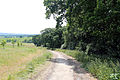 Country path at Woodland Trust wood Theydon Bois Essex England.JPG