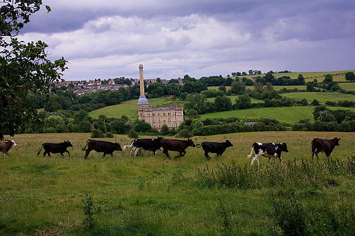 Cows in Chipping Norton