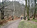 Cycling through the woods - geograph.org.uk - 1175125.jpg