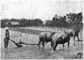 D229- labourage des rizières au tonkin -liv2-ch13.png