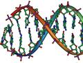 DNA stub.png