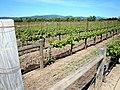DSC31047, Darioush Winery, Napa Valley, California, USA (5530555521).jpg