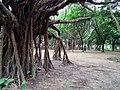 Daan Forest Park 大安森林公園 - panoramio (6).jpg