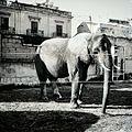 Dark Elefante.jpg