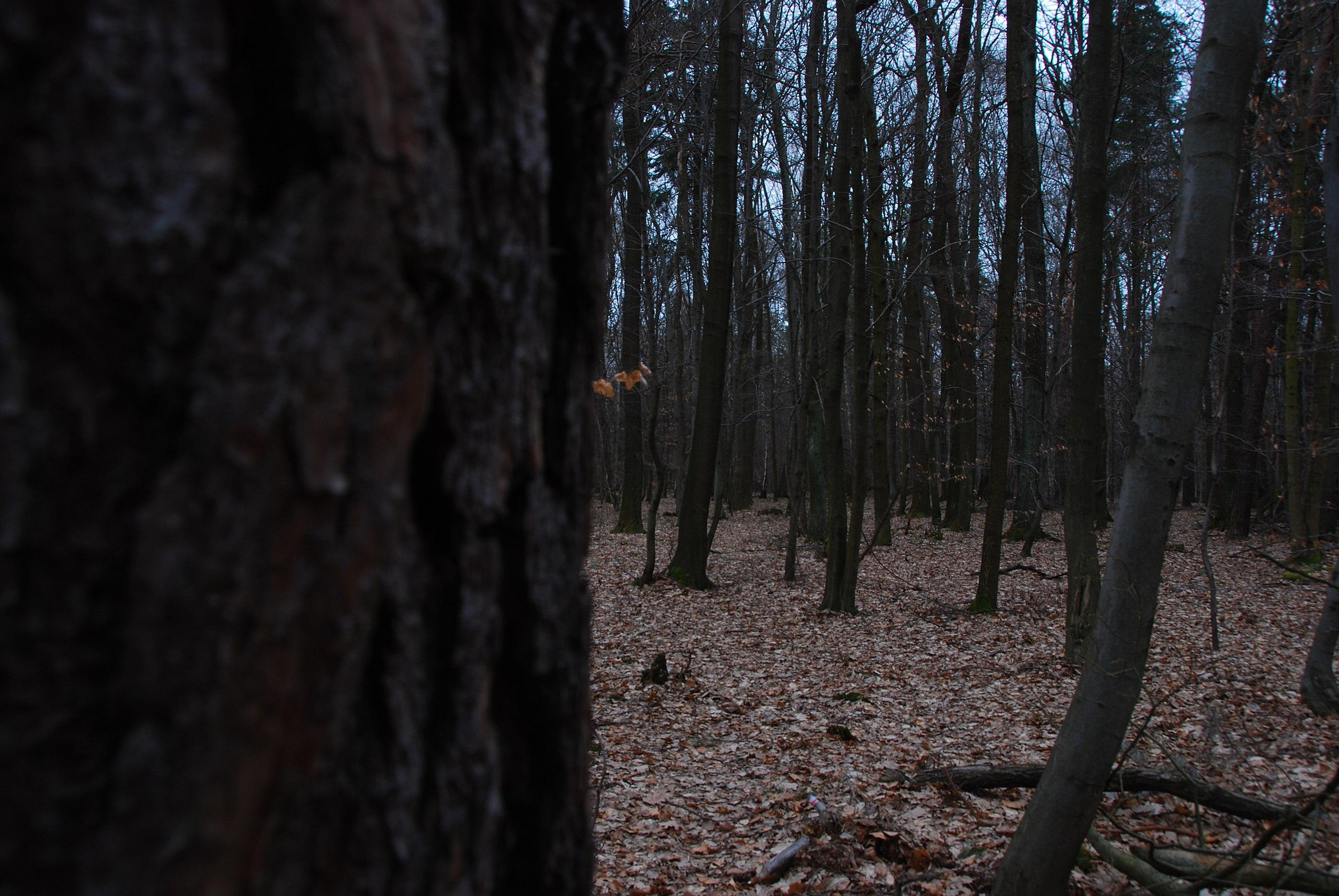 File:Dark Forest.jpg - Wikimedia Commons