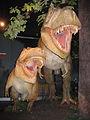 Daspletosaurus torosus pair.jpg