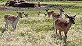Deer Meadow Farms Corn Maze, Deacon Rd, Birds Hill (502014) (24898806741).jpg