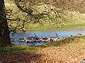 Deer crossing the River Bela - geograph.org.uk - 1125296.jpg