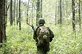 Defense.gov News Photo 120403-M-PT151-126 - A U.S. Marine with Combat Logistics Regiment 25 2nd Marine Logistics Group patrols through a forest during a field exercise at Marine Corps Base.jpg