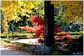 Del Jardín Botanico de Madrid en noviembre de 2013-001 (11053637153).jpg
