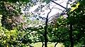 Denbigh Nature (enhanced).jpg