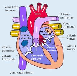 Definición de presión media de llenado circulatorio