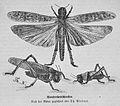 Die Gartenlaube (1875) b 585.jpg